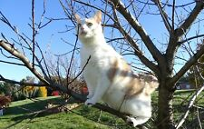 "Scoot & Newts Presents   Good Kitty in the Tree 8 x 10"" Unframed Photo"