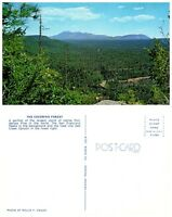 ARIZONA Postcard - The Coconino Forest (A17)
