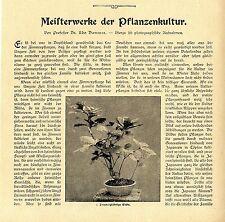 Prof. Udo Dammer kustos ORTI GIARDINO BERLINO BONSAI con 10 Histor.abb.1907
