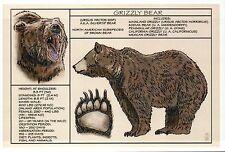 Grizzly Bear, Information Diet Body Paw etc. -- Modern Technical Animal Postcard