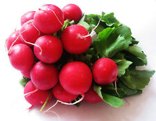 Garden Radish Seed 50 Seeds Raphanus Sativus Cherry Radish Vegetable Seeds C018