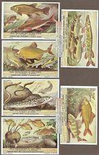 Freshwater Fish 6 Nice c60 Y/O Vintage Trade Ad  Cards