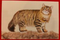 Hand Painted Cat Animal Miniature Painting India Art on Synthetic Ivory