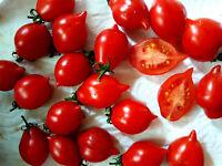 """Wintertomate """"Winterkeeper"""" Tomate, klein, rot, über Monate lagerfähig,"""