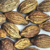 Haritaki Harde Terminalia Chebula Harad Myrobalan Dried Herb -453GM/16 OZ