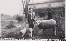 PHOTO. BERNICON 1944 . SUD-OUEST.41. TONNEINS.. l'heure du biberon aux moutons
