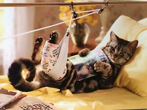 """You'll Pounce Back in No Time!"" FUNNY GET WELL CARD Avanti CAT in CAST"