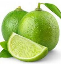 TAHITIAN LIME Citrus latifolia zesty green fruit plant in 180mm pot
