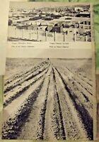 1962 Carte & Image Afrique Libye Tanger le port , Piste au Sahara