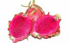 Fruit Seeds - Dragon Fruit Seeds - 25 Nos - PURPLE Dragon Fruit Seed