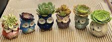 Owl Flower Pot Ceramic Succulent Planter Pots With Succulent