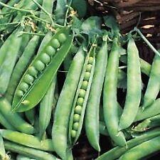 Vegetable - Pea - Hurst Greenshaft -  1kg Seeds - Bulk