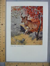 Rare Original Vtg 1923 Mammal Antelope Deer Kudu Color Litho Art Print