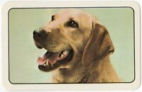 Playing Cards 1 Single Card Old Vintage LABRADOR Dog Art Portrait Picture