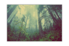 New Beautiful Misty Forest Landscape Wall Prints Poster Art Pictures