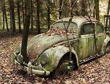1960s VW Beetle Tree Growing Thru Bumper Salvage Yard  8 x 10 Photograph