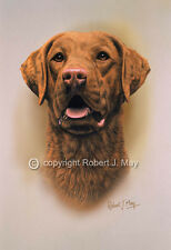 Chesapeake Bay Retriever Print by Robert J. May