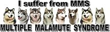 """""""I Suffer from  MULTIPLE  MALAMUTE  SYNDROME"""" Dog Car Sticker by Starprint"""