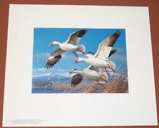 1985 Oregon Duck Stamp Press Proof Print by Michael Sieve