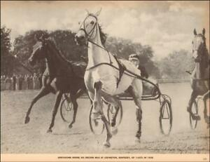 GREYHOUND, HARNESS RACING HORSE, RECORD MILE in LEXINGTON, KENTUCKY, 1952