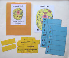 Teacher Made Science Center Learning Resource Game Parts of a Animal Cell