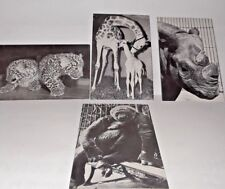 VINTAGES CIRCUS PHOTO POSTCARDS RINGLING BROS AND BARNUM &BAILEY 60'S OLD
