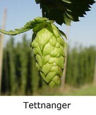 "1x HOPS 4"" pot * TETTNANGER * ( Home brew perennial plant hop bine vine"