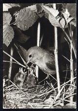 D346# Alte AK Fotokunst Groh München, Vögel im Nest, GENNACH vom 18.12.1978