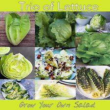 Lettuce MIXED 500+ Seeds Trio Of Lettuce. Iceberg, Cos And Green Mignonette