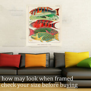 """Vintage Print art Framed Canvas Fish Fishies barrier reef painting old 24"""" 600mm"""