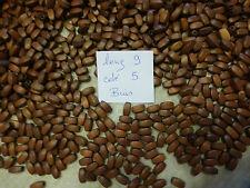 lot 1000 perle en bois très ancienne vieux stock marron 2 achetés = 3 livrés