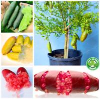 Rare Ice Finger Lime Seeds _Citrus_ Caviar Pomegranate Bonsai Fruit Garden 50Pcs