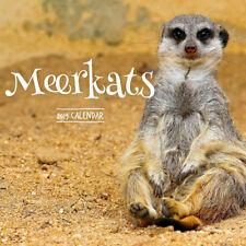 Meerkats 2019 Wall Calendar by Paper Pocket 30 x 30cm, Free Postage (NEW)