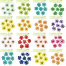 12 pcs Dried Flower Nail Art Decorations Accessories Ornaments Flowers