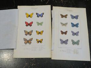 Butterflies - Histoire naturelle des Lépidoptères d'Europe, Paris ca: 1845