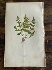 Vintage Fern Print 9.5x6 Edward Lowe Book Country Cottage Art Green Plants