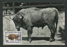 RUSSIA MK 1957 FAUNA BISON WISENT MAXIMUMKARTE CARTE MAXIMUM CARD MC CM d7710