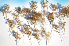Super Realistic model Trees bush armatures for O OO HO N scale scenery diorama