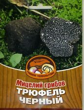 Mycelium of mushrooms Truffle Black