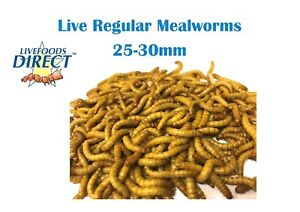 250g Live Mealworms Livefoods Direct Reptile Food insects Bird Treats Wild Birds