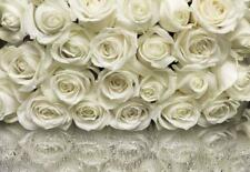 Wall Mural WHITE ROSES photo Wallpaper 368x254cm Flowers wallvovering KOMAR