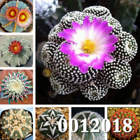 100 PCS Seeds Mix Lithops Bonsai Succulent Potted Plants Rare Organic Garden New
