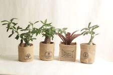 3PCS grow pots,Breathable Plant Bags,specail for adenium,no plants,USA Free ship