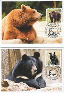 Russia 2020 Fauna 03 European brown bear Asian black bear