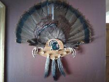 A.M.M. Red Oak Turkey Fan/Beard Mounting Kits~{Strutting Tom}