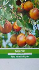 4'-5' AYERS PEAR Tree New Plant Healthy Fruit Trees Natural Pears Garden Plants