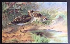 JACK SNIPE POSTCARD Game Birds - Series 2 - TUCK'S Oilette 8782 Unposted 162