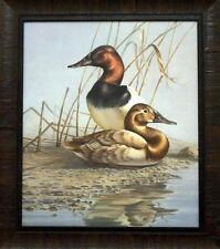 James Meger Canvasbacks Duck Print=Framed 22.5 x 25.5