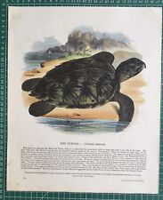 1845 Antique Print; Hawksbill Sea Turtle by SDUK / Whymper