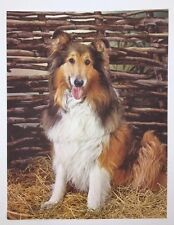 Vintage 8-1/2 x 11 Sitting Collie Dog & Wattle Fence Photograph Art Print 1900's